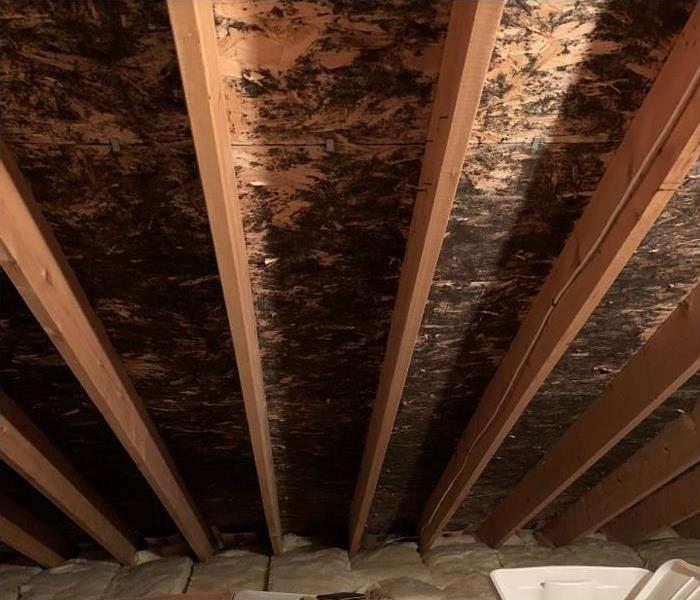 visible mold damage in attic