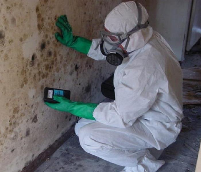 Mold Remediation Rehoboth Residents: Do You Need a Mold Inspection or Mold Testing?