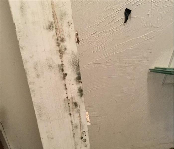 Mold Remediation A List of Useful Tips on Black Mold Remediation