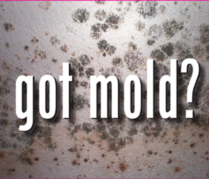 Mold Remediation Norton Residents:  Follow These Mold Safety Tips If You Suspect Mold