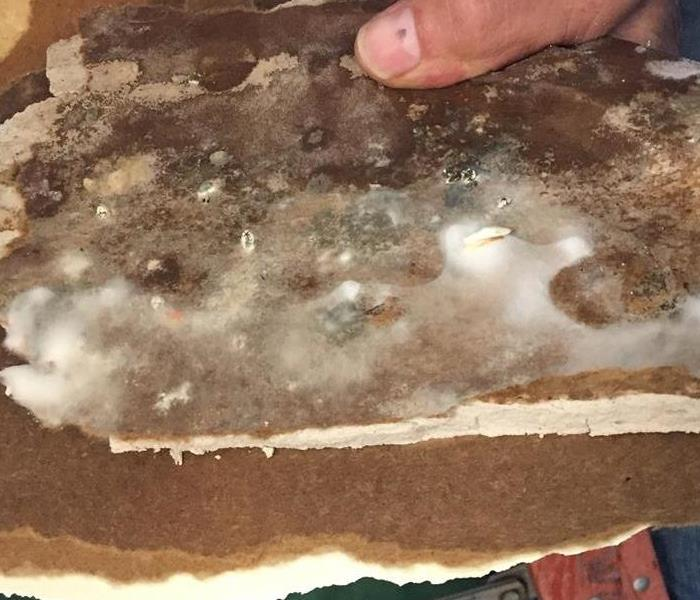 Mold Remediation Why Getting Rid of Mold is Necessary