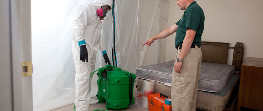Mansfield, MA mold removal process